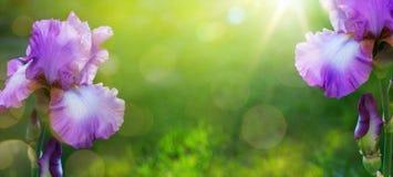 Καλοκαίρι τέχνης ή όμορφο υπόβαθρο κήπων άνοιξης Στοκ Εικόνες