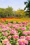 Καλοκαίρι τομέων λουλουδιών στοκ φωτογραφία με δικαίωμα ελεύθερης χρήσης