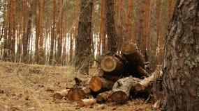 Καλοκαίρι Forrest Στοκ φωτογραφίες με δικαίωμα ελεύθερης χρήσης