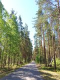 Καλοκαίρι Forrest Στοκ φωτογραφία με δικαίωμα ελεύθερης χρήσης