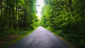 Καλοκαίρι Forrest Στοκ Εικόνες