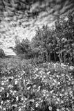 Καλοκαίρι Wildflowers στο Tetons Στοκ φωτογραφία με δικαίωμα ελεύθερης χρήσης