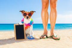 Καλοκαιρινές διακοπές σκυλιών και ιδιοκτητών Στοκ φωτογραφίες με δικαίωμα ελεύθερης χρήσης