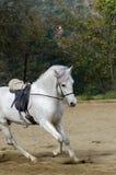 καλπάζοντας άλογο Στοκ εικόνα με δικαίωμα ελεύθερης χρήσης