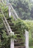 Καλυμμένα άμπελος σκαλοπάτια στοκ εικόνα με δικαίωμα ελεύθερης χρήσης
