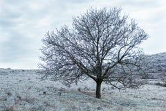 καλυμμένα δέντρα πάγου Στοκ εικόνα με δικαίωμα ελεύθερης χρήσης