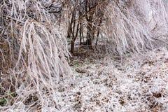 καλυμμένα δέντρα πάγου Στοκ φωτογραφία με δικαίωμα ελεύθερης χρήσης