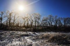 καλυμμένα δέντρα πάγου Στοκ Φωτογραφία