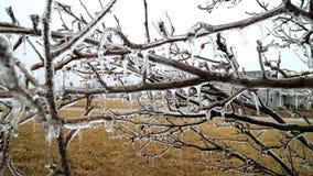 καλυμμένα δέντρα πάγου Στοκ Φωτογραφίες