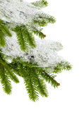 καλυμμένα δέντρα χιονιού το έλατο κλάδων απομόνωσ&epsil Στοκ Εικόνα