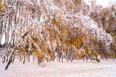 καλυμμένα δέντρα χιονιού Στοκ εικόνα με δικαίωμα ελεύθερης χρήσης