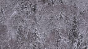 καλυμμένα δέντρα χιονιού Στοκ Εικόνες