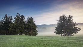 Καλυμμένα ομίχλη δέντρα στην κοιλάδα Στοκ Εικόνες