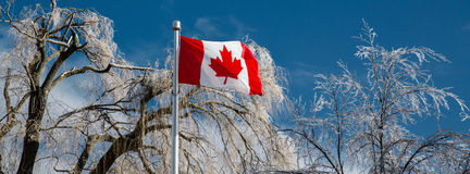 Καλυμμένα πάγος δέντρα πίσω από μια καναδική σημαία - έμβλημα Στοκ Φωτογραφία