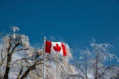Καλυμμένα πάγος δέντρα πίσω από μια καναδική σημαία Στοκ Φωτογραφίες
