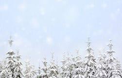 καλυμμένα φρέσκα δέντρα χι&omi Στοκ Εικόνα