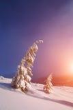 καλυμμένα φρέσκα δέντρα χι&omi Στοκ Φωτογραφίες