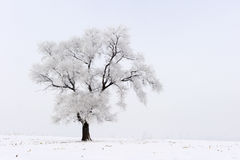 καλυμμένα όρη σπιτιών ελβετικά χειμερινά δάση χιονιού σκηνής μικρά Στοκ Φωτογραφία