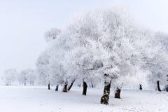 καλυμμένα όρη σπιτιών ελβετικά χειμερινά δάση χιονιού σκηνής μικρά Στοκ Εικόνες