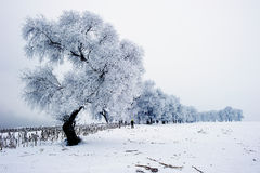 καλυμμένα όρη σπιτιών ελβετικά χειμερινά δάση χιονιού σκηνής μικρά Στοκ Εικόνα