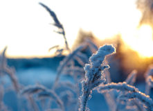 καλυμμένα όρη σπιτιών ελβετικά χειμερινά δάση χιονιού σκηνής μικρά Στοκ φωτογραφία με δικαίωμα ελεύθερης χρήσης