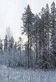 καλυμμένα όρη σπιτιών ελβετικά χειμερινά δάση χιονιού σκηνής μικρά Στοκ Φωτογραφίες