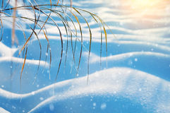 καλυμμένα όρη σπιτιών ελβετικά χειμερινά δάση χιονιού σκηνής μικρά Στοκ εικόνες με δικαίωμα ελεύθερης χρήσης