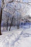 Καλυμμένα Hoar δέντρα στο χειμερινό πάρκο, κάθετο Στοκ φωτογραφία με δικαίωμα ελεύθερης χρήσης
