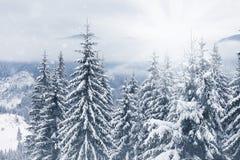 καλυμμένα hoarfrost δέντρα χιονιού βουνών βουνών σπιτιών Στοκ Εικόνες