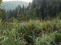 Καλυμμένες δροσιά χλόες στοκ εικόνα