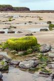 Καλυμμένη άλγη πέτρα σε μια ιρλανδική παραλία Στοκ Εικόνα