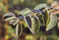 καλυμμένη η ανασκόπηση δροσιά αυγής ρίχνει την πράσινη φύση πρωινού φρεσκάδας φυλλώματος γύρω από το διάνυσμα άνοιξη Στοκ φωτογραφία με δικαίωμα ελεύθερης χρήσης