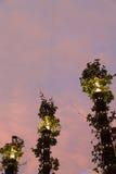 Καλυμμένοι άμπελος λαμπτήρες στον ουρανό ηλιοβασιλέματος Στοκ φωτογραφία με δικαίωμα ελεύθερης χρήσης