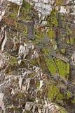 καλυμμένοι βράχοι βρύου Στοκ Εικόνες