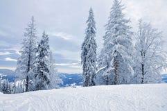 καλυμμένος δασικός χειμώνας χιονιού Στοκ Εικόνες
