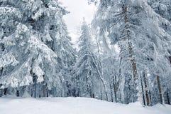 καλυμμένος δασικός χειμώνας χιονιού Στοκ Εικόνα