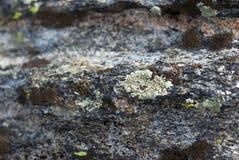 Καλυμμένος λειχήνα βράχος Στοκ Φωτογραφίες