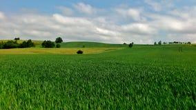 Καλυμμένος ουρανός πέρα από τους πράσινους τομείς στοκ εικόνες με δικαίωμα ελεύθερης χρήσης