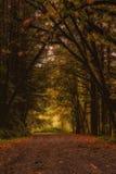 Καλυμμένος δρόμος Στοκ Φωτογραφία