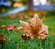 Καλυμμένος στα φύλλα… Στοκ Φωτογραφία