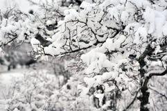 Καλυμμένος στο χιόνι | 3 Στοκ Εικόνα
