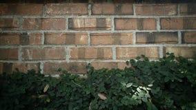 καλυμμένος τοίχος αμπέλ&omega Στοκ εικόνα με δικαίωμα ελεύθερης χρήσης
