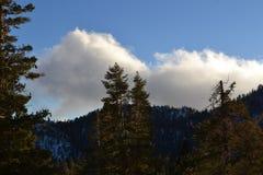 Καλυμμένο δέντρο βουνό Στοκ Εικόνες