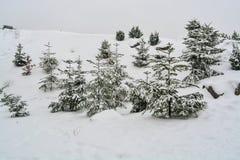 καλυμμένο δέντρο χιονιού έ&l Στοκ φωτογραφία με δικαίωμα ελεύθερης χρήσης