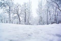καλυμμένο δέντρο χιονιού Στοκ Εικόνα