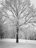 καλυμμένο δέντρο χιονιού Στοκ εικόνες με δικαίωμα ελεύθερης χρήσης