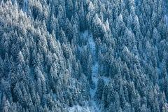 καλυμμένο δασικό χιόνι έλα& Στοκ Φωτογραφία