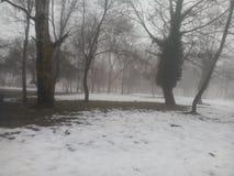 καλυμμένο δασικό χιόνι Στοκ Φωτογραφία