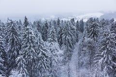 καλυμμένο δασικό χιόνι στοκ εικόνα