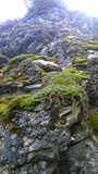 Καλυμμένο βρύο πρόσωπο απότομων βράχων Στοκ Φωτογραφίες